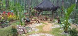 Hutan Pinus Watu Jali Destinasi Wisata Baru Kebumen