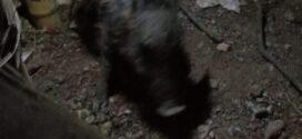 Babi Ngepet Depok Viral: Ditangkap 7 Orang dengan Telanjang, Ini Berita Lengkapnya