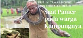 Tewas Digigit Ular King Kobra 4,2 Meter saat Pamer ke Warga